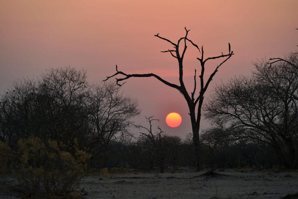 Sonnenaufgang bei der Savuti Campsite