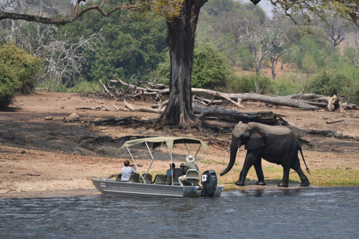 Elefant nahe an einem Touristen Boot