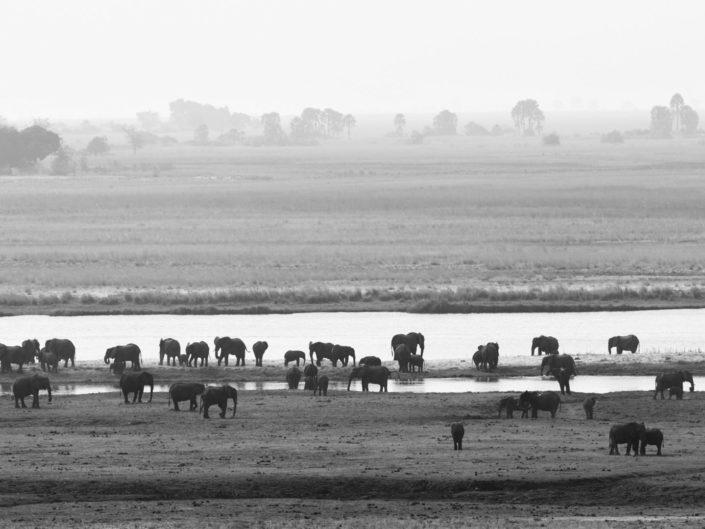 Chobe Botswana 2019