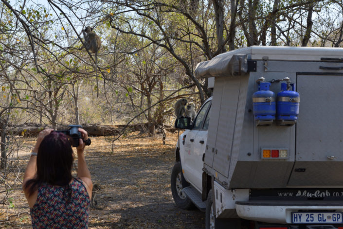 Khwai Campsite, Doris filmt die Affen