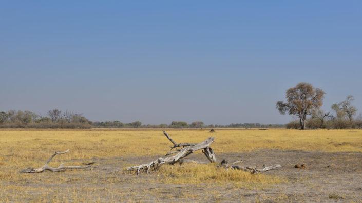 Landschaft beim Khwai Camp