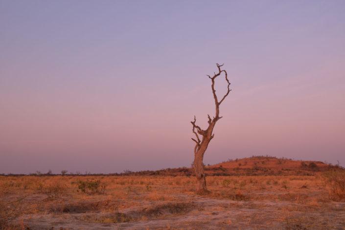Baum bei der Savuti Campsite