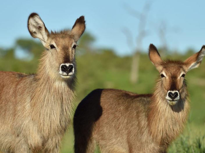 Kruger National Park December 2019