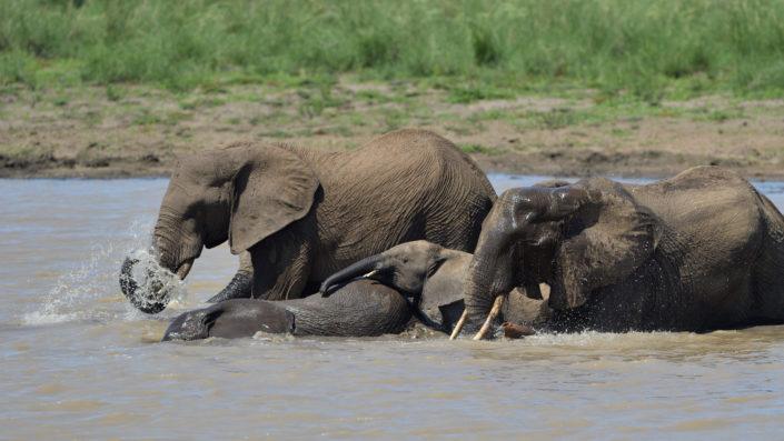 Mazithi dam Kruger