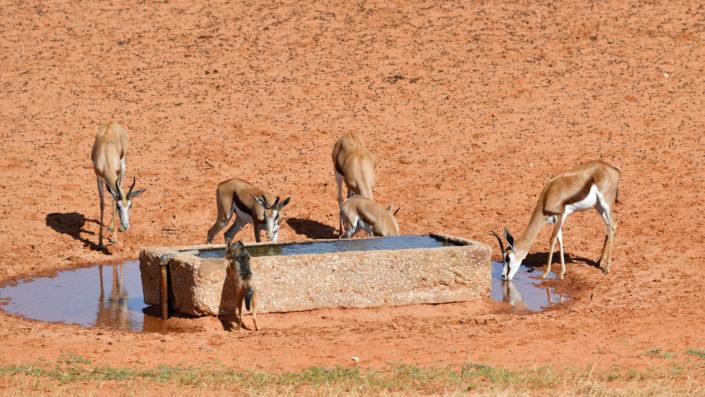 Wasserloch beim Gharagab Wilderness Camp