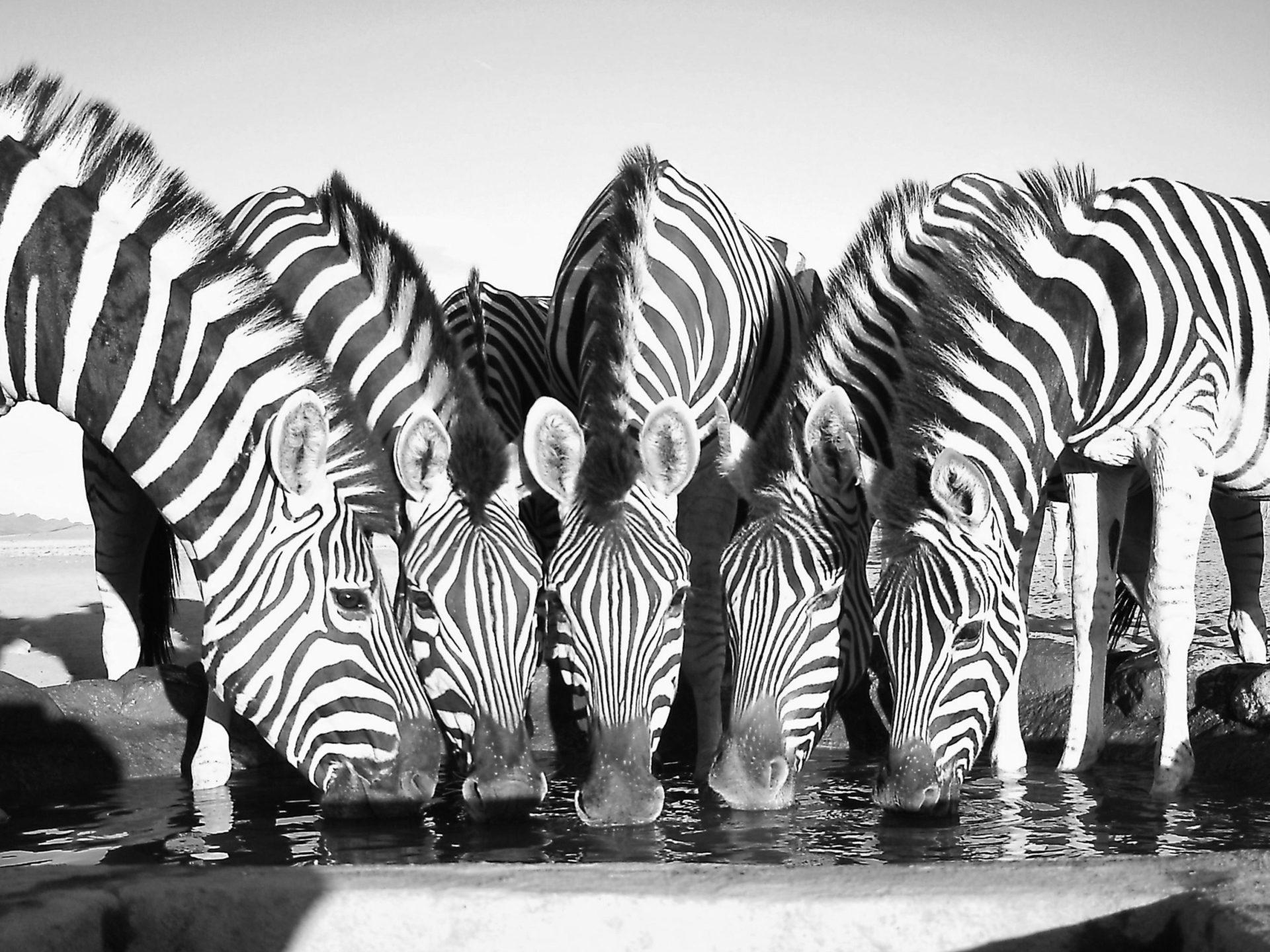 NamibRand Family Hideout